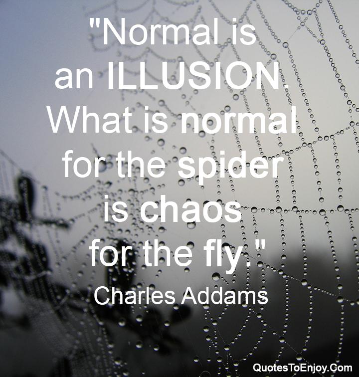 Ciò Che è Normale Per Il Ragno è Il Caos In Volo