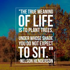 Nelson Henderson